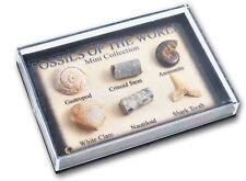 FOSSIL BOX FAB educativo GEOLOGIA Dinosauro natura regalo per il collezionista