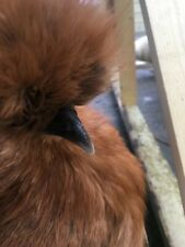 Poultry & Waterfowl Hatching Eggs for sale   eBay