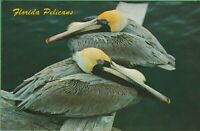 Vintage Postcard Florida Pelicans Flying Suitcases FL