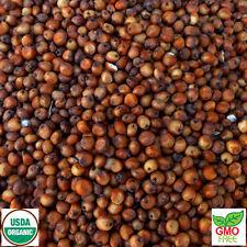Milo Seed: Sorghum (Birdseed Fodder Field) Certified Organic: GMO-FREE - 1lb