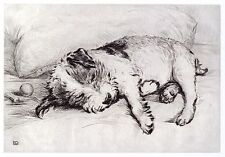 WIRE FOX TERRIER PARSON JACK RUSSELL DOG ART PRINT Sleeping Puppy by Lucy Dawson