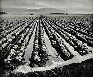 1959 Vintage ANSEL ADAMS Farming Irrigation Landscape Photo Gravure Art 12x16
