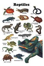 Reptiles Poster, Snake, Alligator, Turtle, Lizard