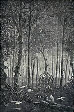 Antique woodcut print : Colombian swamp,flooded forest Colombia Riou 1880