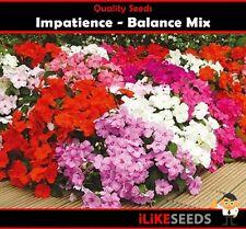 Impatiens Balance Mix 25 Seeds Minimum Colourful Garden Flower Plant. Best Type.