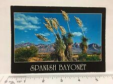 Postcard Spanish Bayonet Desert Yucca Desert Vegetation Photo by Art Teidemann