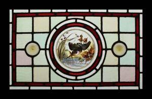 Beautiful Rare Painted Lakeland Kingfisher Antique English Stained Glass Window