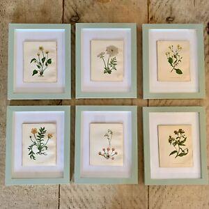 Set of 6 Beautiful Antique Botanical Prints, Framed - dating 1855
