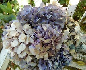 11 Dried Hydrangea Flowers Lavender, Purple  + Beige Crafts SECONDS
