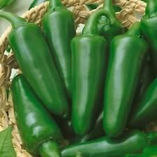 TAM JALAPENO HOT PEPPER GARDEN SEEDS - NON-GMO, HEIRLOOM VEGETABLE GARDENING