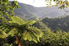 Costa Rican Organic Coffee Beans La Pastora Tarrazu Fresh Roasted 5 / 1LBS Bag