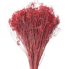 Dried Natural Broom Blooms Flower Bundle