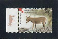 Donkey, Mulet,