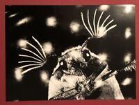 Ingrid Beckmann, Maikäfer flieg 4, Photographie, 1990, handsigniert und datiert