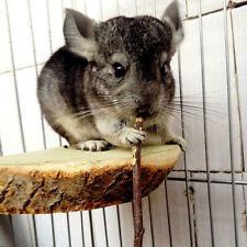 UK 100g Pet Snack Wood Branch Molar Sticks Twig for Hamster Rabbit