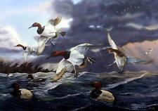 "Terry Doughty ""Canvasback Memories"" Duck Art Print 24"" x 15.75"" SN Artists Proof"