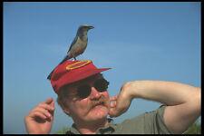 311034 Birdman e scrub Jay A4 FOTO STAMPA