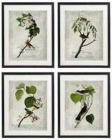 Vintage Bird & Botanical No.6 Home Decor Wall Art Print Set of 4 Prints UNFRAMED