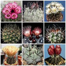 20 semillas mezcla de Pyrrhocactus, cactus mix,plantas suculentas,seeds mix S