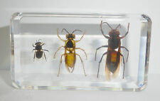 Honey Bee & Black Shield Wasp & Lesser Band Tiger Hornet Collection Set Clear