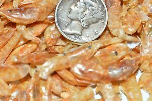 Premium Sun dried River Shrimp Cichlids Koi Bird Fish,Turtles Terrapins,Reptile