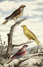 Oiseaux Passereaux Serin Tarin Cuvier Buffon gravure originale 19e