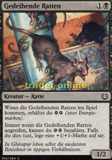 4x seulemant le rat (thriving Conseil) kaladesh Magic