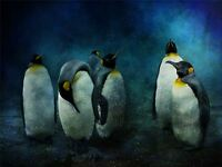 ART PRINT POSTER PHOTO ANIMAL PENGUIN SNOW COLD GROUP LFMP0462