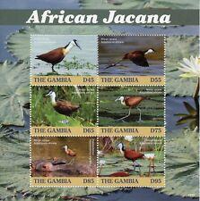 Gambia 2019 MNH African Jacana 6v M/S Jacanas Birds Stamps
