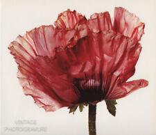 1968/80 Vintage MATTED Poppy Flower IRVING PENN Botanical Photo Engraving 16x20