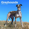 Greyhounds 2020 Square Wall Calendar by Browntrout Free Post