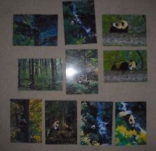 10 Modern Postcards,  Pandas, Wildlife, Nature, Animals