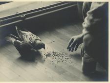 France, pigeons Vintage Print Tirage argentique  17x22  Circa 1939