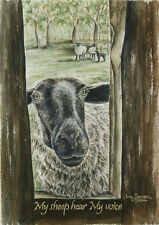 """My Sheep"" 11x14 double-matted Watercolor Art Print by artist Julie Hammer"