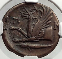 PANTIKAPAION BOSPORUS 310BC RARE R1 Ancient Greek Coin PAN & GRIFFIN NGC i61946