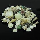 100 + Beach Mixed SeaShells 250g + Mix Shells Craft Sea from Sydney