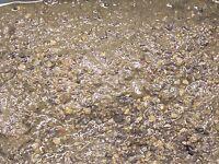 Live Mineral Mud sand 10 lbs! Refugium Macro algae corals fish reef miracle pods