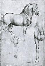 Study of Horses 1490 Leonardo da Vinci   Poster Print