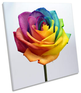 Rainbow Rose Flower Floral CANVAS WALL ART SQUARE Picture Print