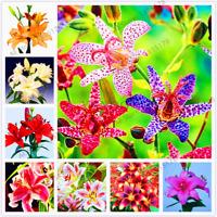 100 PCS Seeds Lilium Double Lily Flowers Plants Faint Scent Bonsai Home Garden V