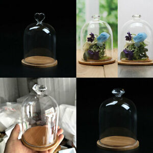 Glass Display Bell Jar Dome Cloche With Wooden Base Vintage Display Flower Box