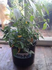 Aero-Pot 5Litre Wicking system