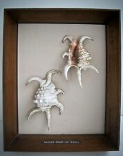 Mid Century Framed Scorpion Spider Conch Sea Shells Nautical Sea Shell Art