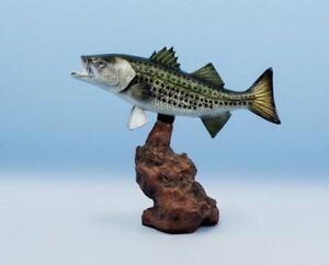 "Taxidermy Striped Bass Trophy 20"""