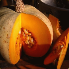 40 Sweet Meat Winter Squash Seeds - Everwilde Farms Mylar Seed Packet
