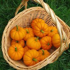 Jack Be Little Miniature Mini Tiny Pumpkin Seeds 25 Ct NON-GMO USA FREE SHIPPING