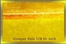 Vinegar Eels 1 oz, 5 oz, or 12 oz Live Culture Free Shipping Buy 2 Get 1 Free
