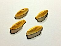 Dolls House Food. Cornish Pasties. 12th Scale. Set Of Four. New. Handmade