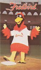 Fredbird Official Mascot Card St Louis Cardinals Major League Baseball Team 1980