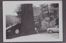 OLD REDWOOD STATE PARK CALIFORNIA WORLD FAMOUS TREE HOUSE ROADSIDE SIGN PHOTO